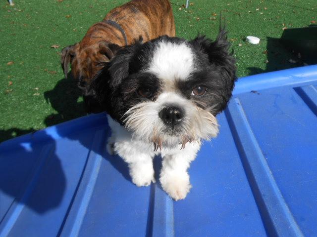 dog on playground equipment