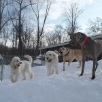 four dogs play on snow mound