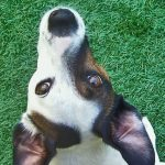 Overhead shot of a dog