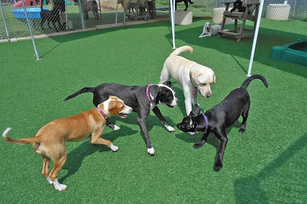 Dogs playing in a small group