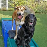 Dogs on slides