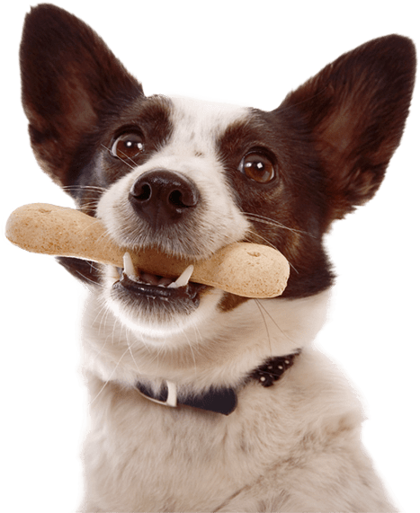 Dog with a bone in it's mouth