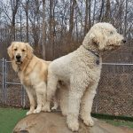 Dogs standing on a large rock