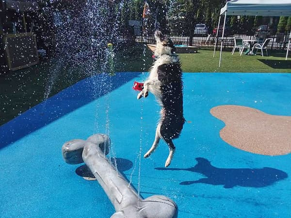 dog playing in the splashpad area