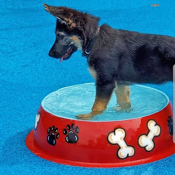 dog playing in a pool
