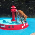 dog playing with a fountain