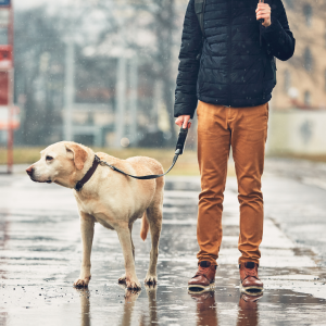 dog and owner in the rain